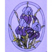 Bearded Iris - Product Image